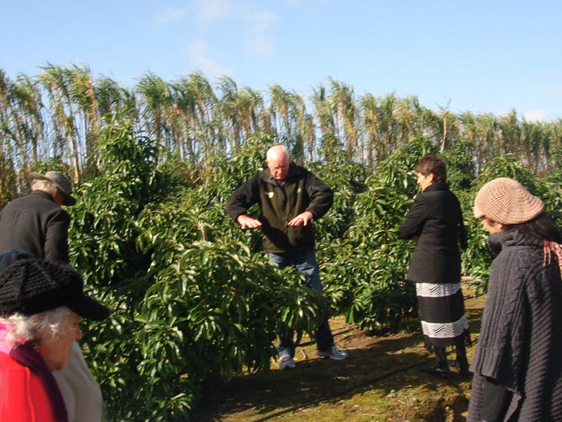 Orchard Manager Paul Tolloday explains how the avocado trees are nurtured